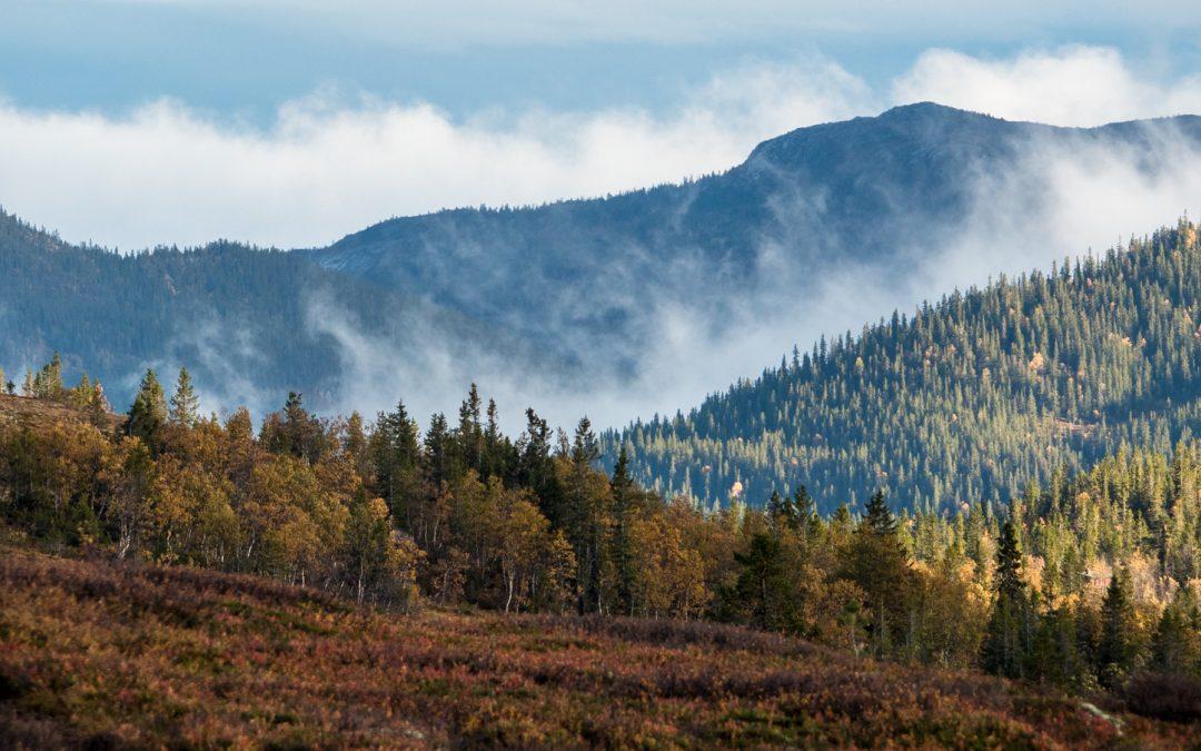 Norsk Naturguideforbund sitt innspill til regjeringa si reiselivsstrategi